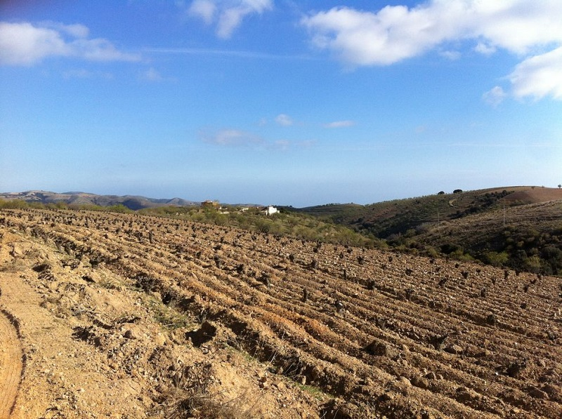 """This is Europes highest planted vineyard, Pago Cerro Las Monjas, at the altitude 1368 meters above sea level. Barranco Oscuro has one wine from this vineyard called """"1368""""."""