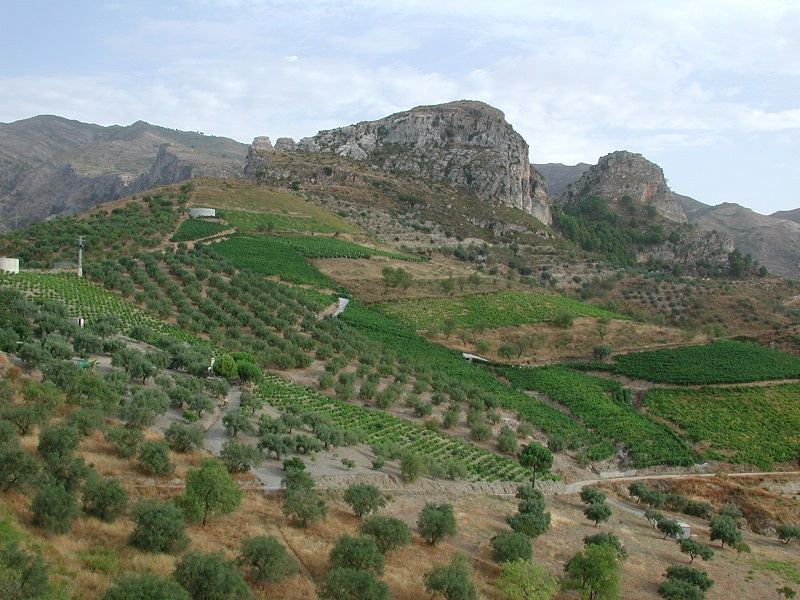 Some of the many small plots of vineyards in the Castillejos area, where the Moors had their vegetable and fruit gardens 1000 years ago.