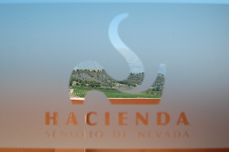 Vineyards seen through the logo for the hotel and the winery.