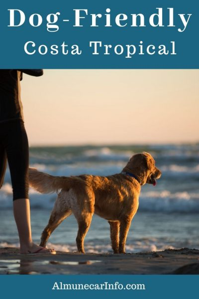 Your pets are welcomed in Costa Tropical; dog friendly beaches, La Herradura dog park, pet-friendly hotels, campsites & more throughout Andalucia. Read more on Almunecarinfo.com